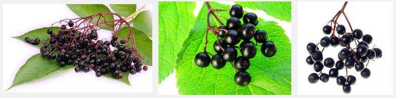 Elderberry Pills